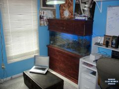 My tank in my room