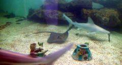 Mote Aquarium shark2