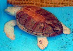 Mote Aquarium Turtle