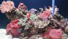 Mote Reef