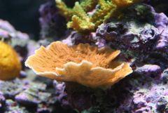 Orange Monti Plate from Mogurnda (5/18/08)
