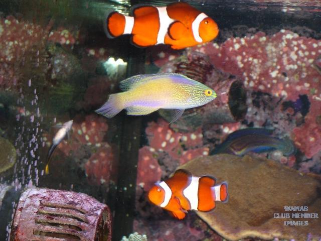 fish sep9 022a.jpg
