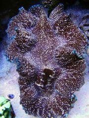 Coral Hind 5-2010.jpg