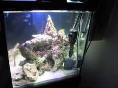 Cube Reef Build 3