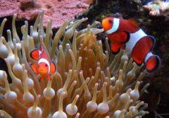 clownfish 2013
