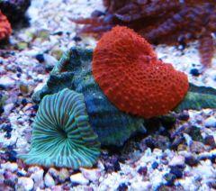 Green & Red Mushrooms