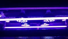 40 Reef Lights
