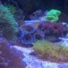 Ross's Reef